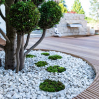 Moss as an ornamental element in landscaping and garden design